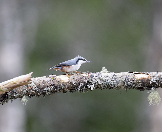 A close-up of a bird
