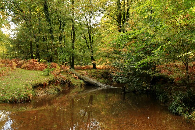 Autumnal Tranquility