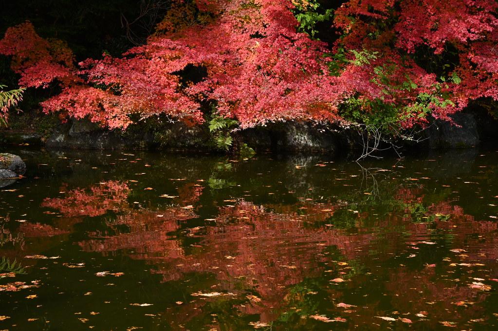 善峯寺の秋