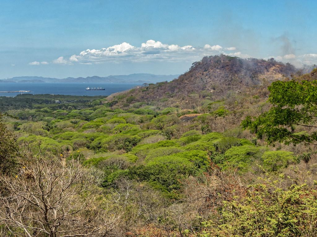 La forêt sèche du nord-ouest (Costa Rica) et ses incendies... 50617162383_3c1eb5abef_b