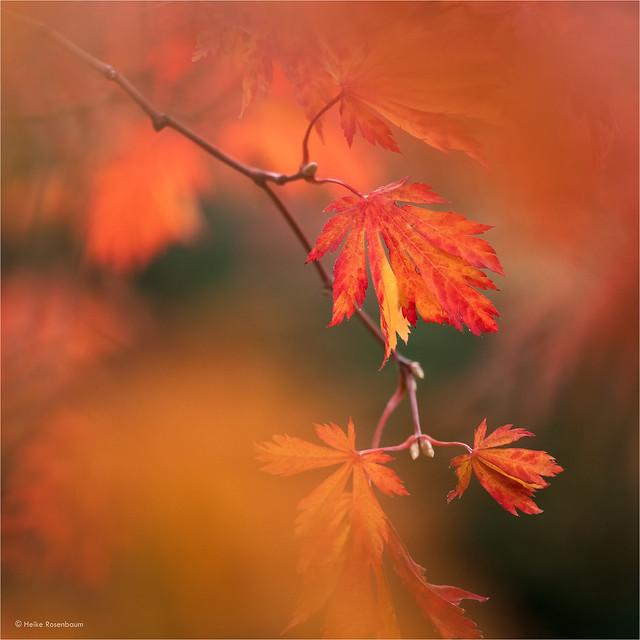 Autumn delight (in explore)