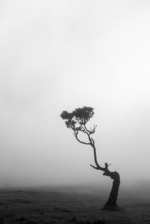 Misty Fanal forest