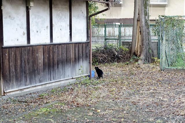 Today's Cat@2020−11−18