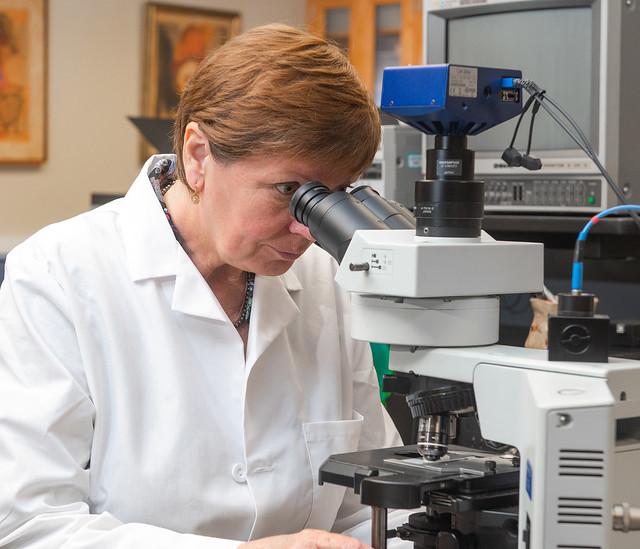 Ludmila Globa uses a microscope