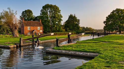 papercourtlockandcottage riverwey locks cottages trees wetreflections swans