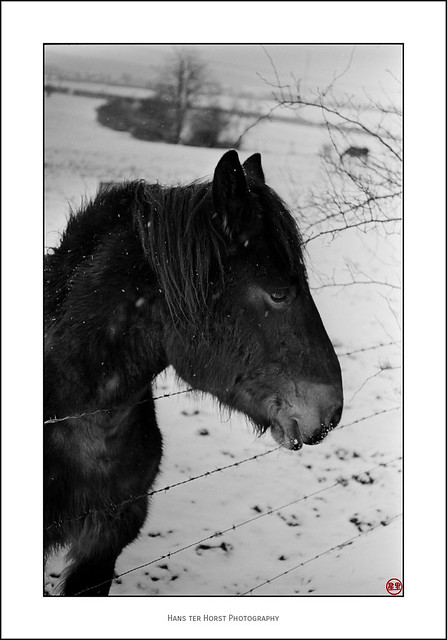 Friendly horse in the snow