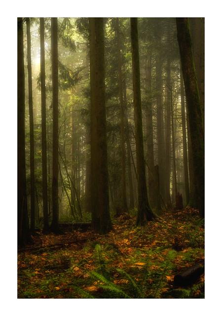 Rain Forest, B.C.