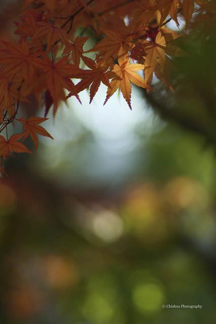 leafcolor 2020 autumn