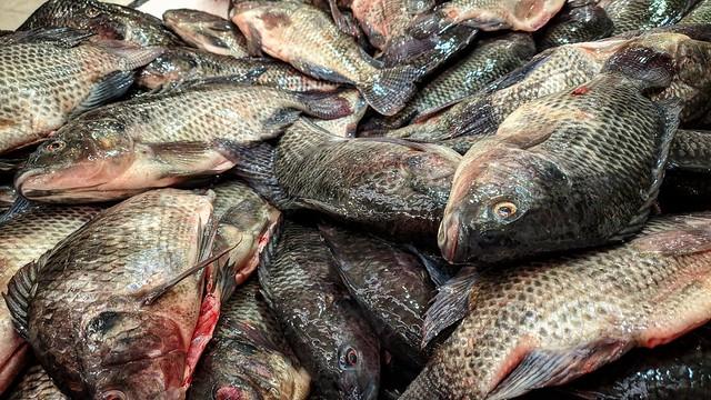 Fish Bonanza