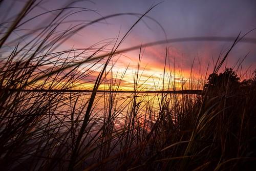 virginia sunset reeds northwestbranchbackriver river backriver