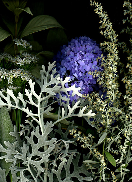 60704.01 Cornus alba ' Elegantissima', Artemisia ludoviciana 'Silver Queen', Allium tuberosum, Hydrangea macrophylla 'Endless Summer', Senecio cineraria 'Silver Dust' Stachys lanata