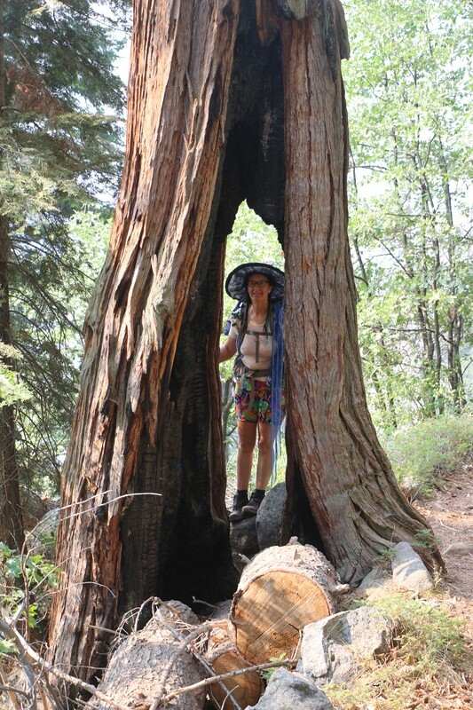 Vicki poses, looking through the hollowed and fire-scarred trunk of a tall pine along the High Sierra Trail