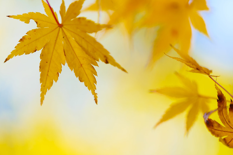 Autumn Foliage at Saidaiji