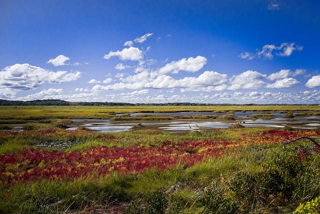 Colorful Salt Marsh Scene