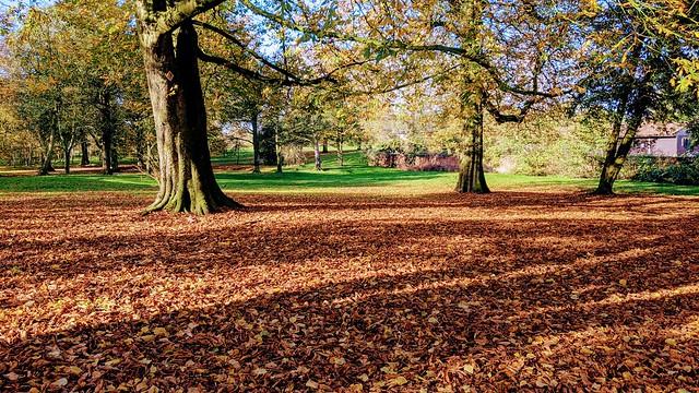 Autumn scene at Ashton Park, Preston