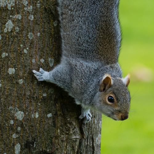 Performing squirrels