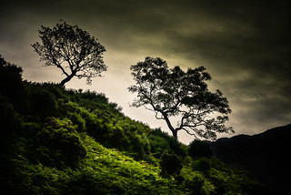 Moody Trees | by creativegaz