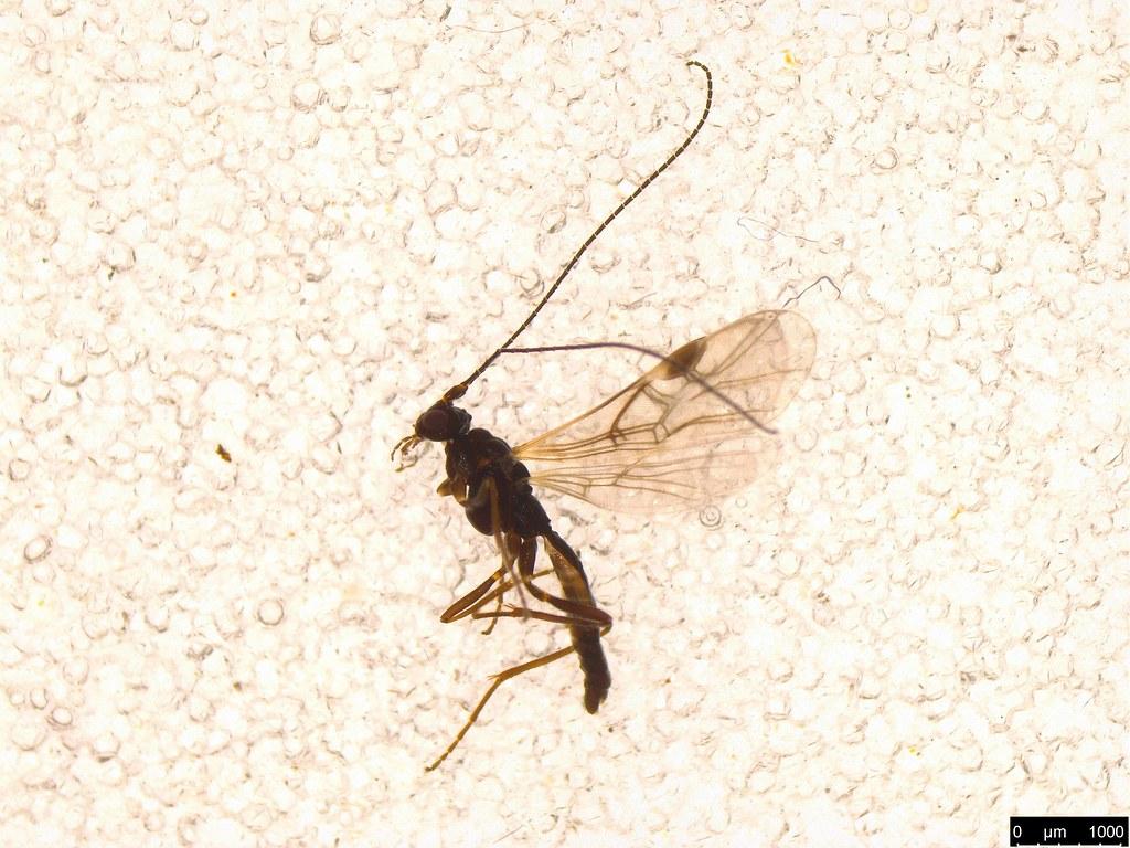 14 - Hymenoptera sp.