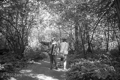 Covid-19 Walk