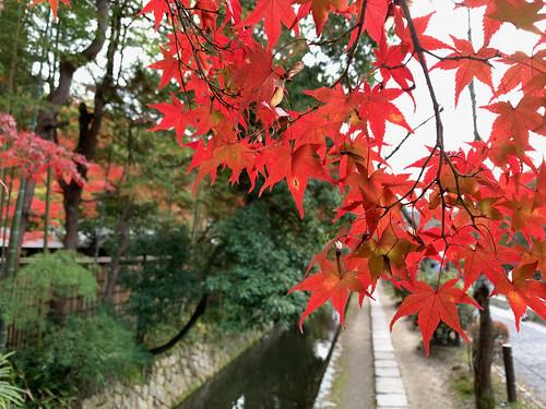 京都 哲学の道の紅葉