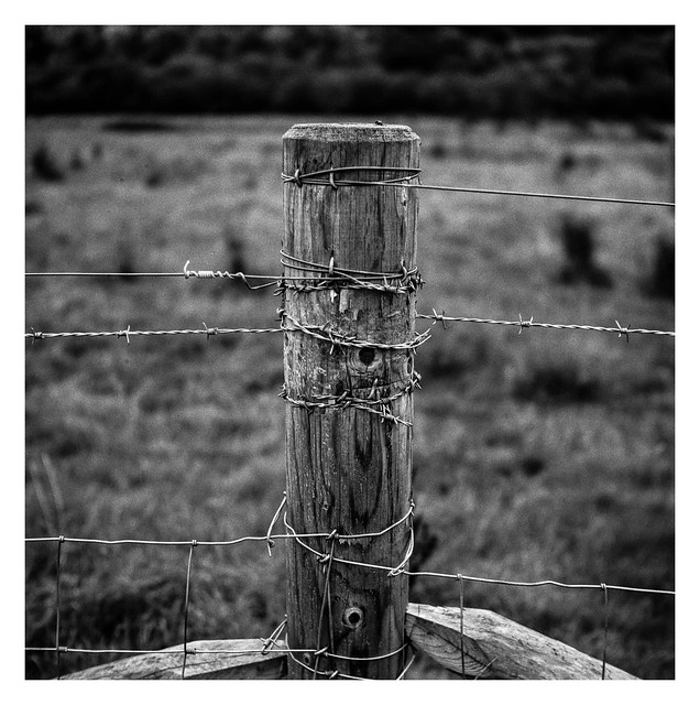 Barbed post