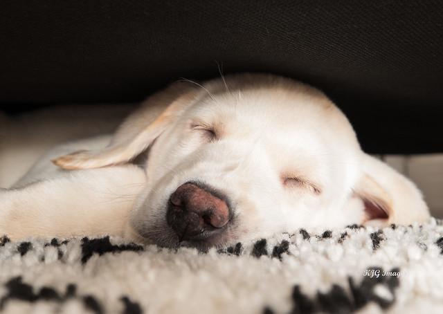 Shh, I'm Sleeping