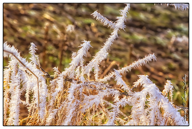 Cold #CanonPhotography