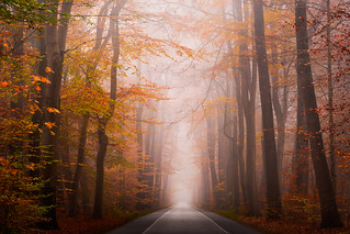 Autumn Road | by albert dros