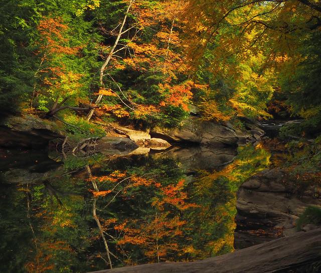 Slippery Rock Creek - Square Crop