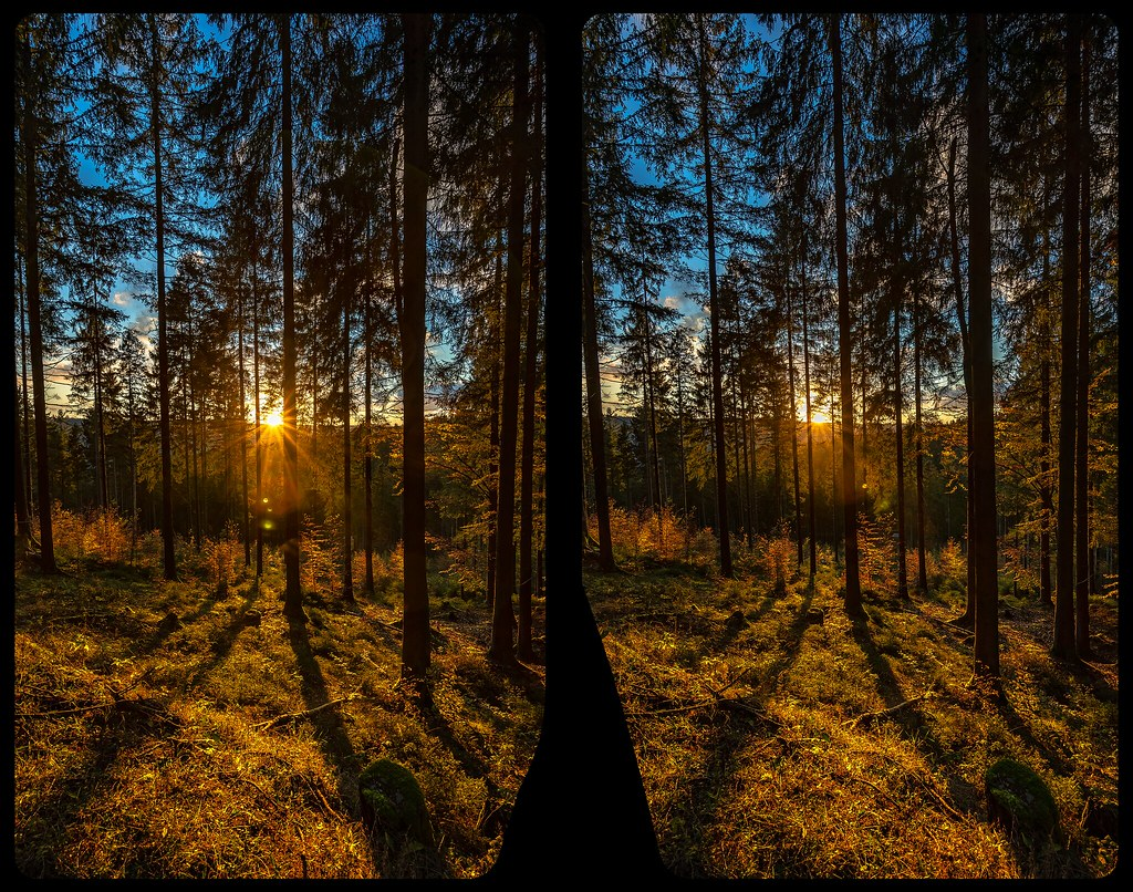 Sunset in the woods 3-D / CrossView / Stereoscopy