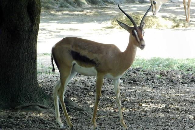 Memphis Zoo 17
