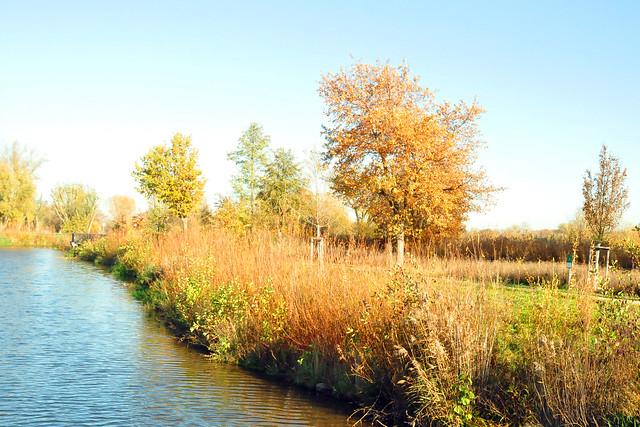 November 2020 ... Die Fischkinderstube am Neckar zwischen Edingen und Neckarhausen ... Brigitte Stolle