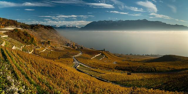 Lavaux et brumes sur le Léman (Switzerland)