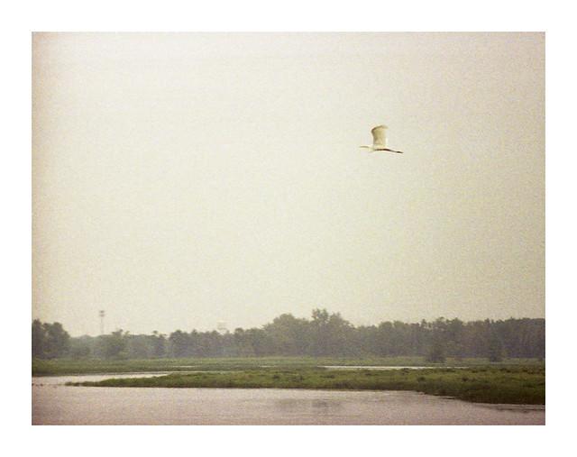 White Egret on a Hazy Summer Day