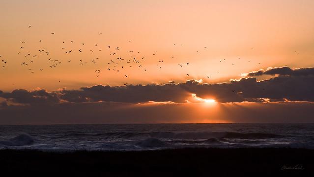 flight of the evening gulls