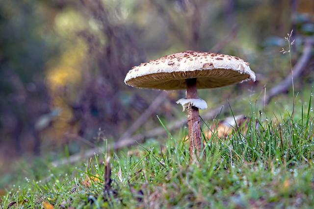 the beauty of fungi