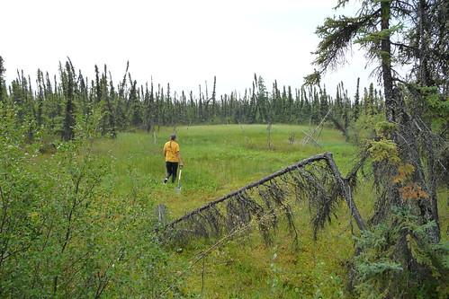 Wed, 08/08/2018 - 11:41 - Scotty Creek, Canada FDP