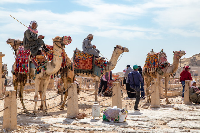Armchair Traveling - Camels for Hire at the Great Pyramids