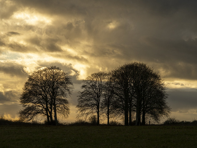 Lavington Folly at Afternoon's End