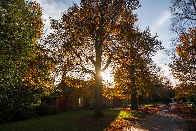 Autumn at Clumber