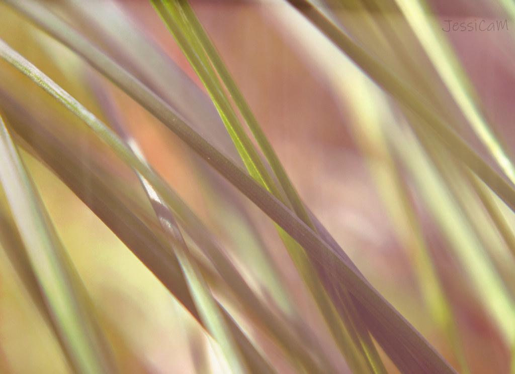 Grass Textured.