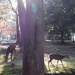 Autumn in Nara Park