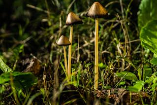 mushrooms-0912