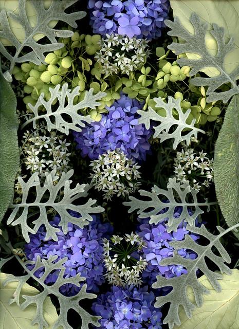 60708.01 Cornus alba ' Elegantissima', Artemisia ludoviciana 'Silver Queen', Hydrangea paniculata 'Grandiflora', Allium tuberosum, Hydrangea macrophylla 'Endless Summer', Senecio cineraria 'Silver Dust' Stachys lanata