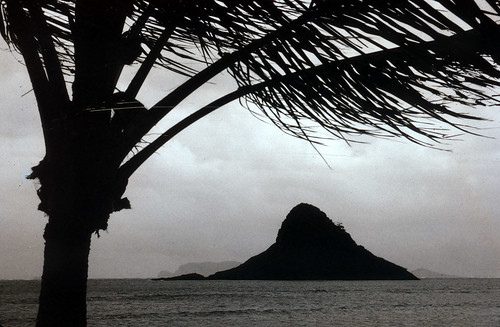 Palm Tree & Island