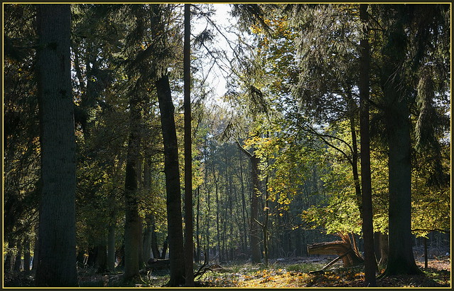 Es wird Herbst im Park ...