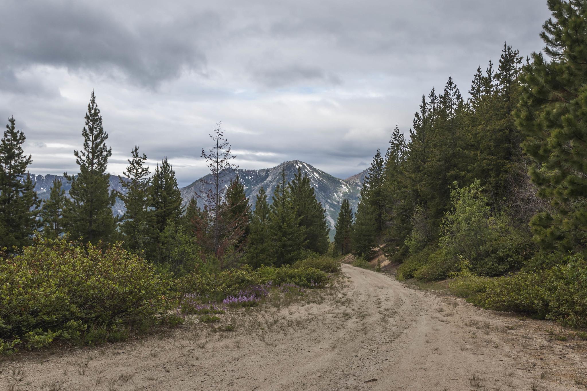 Trailscape