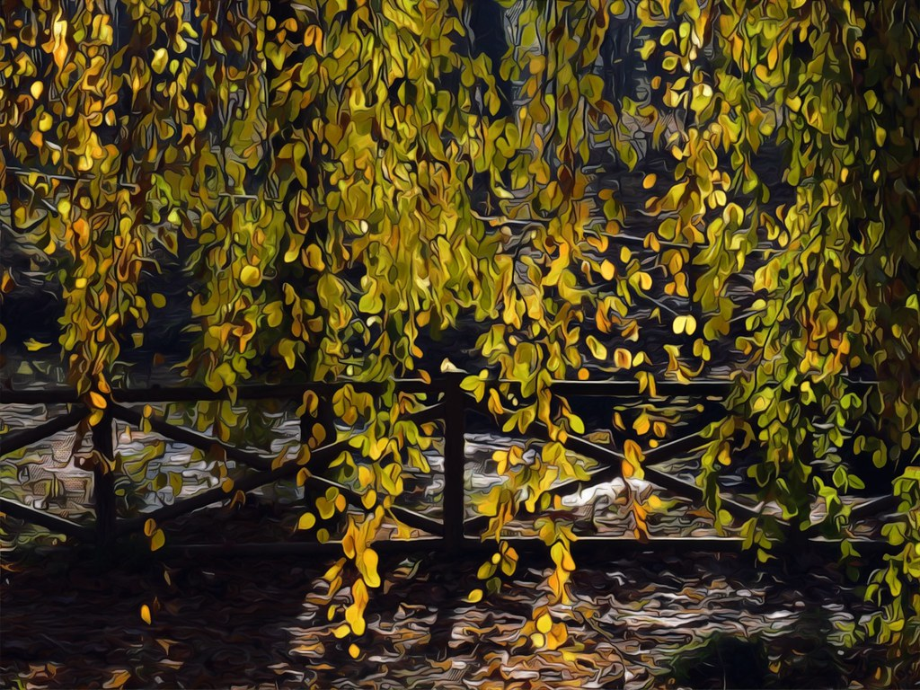 Salice piangente - Weeping willow