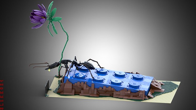 The ants' world
