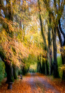 Wk44 - Autumn Colours | by MarieAngeB